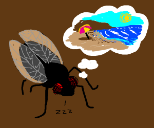 Fly dreams of beach