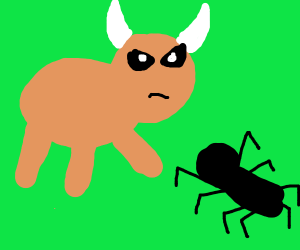 Duel between a bull and a spider