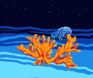 ocean at night with coral and a shell