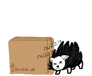 Porcupine nuzzles cardboard box