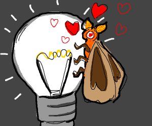 moth is in love with light
