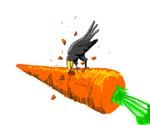 crow eating a carrot