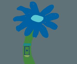 safe flower