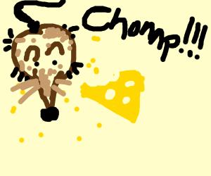 brown rat eating cheese