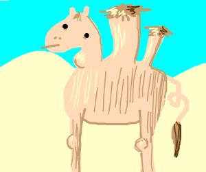 Severely deformed camel