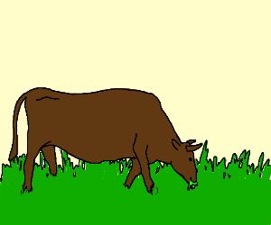 bull eating grass