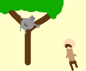 Angry koala in a tree