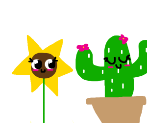 A sunflower and galaxy cactus are friends