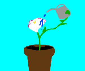 potted plant waters self