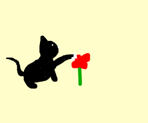 cat clawing at flower