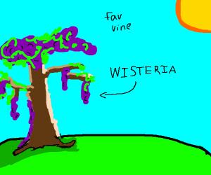 fav vine pio