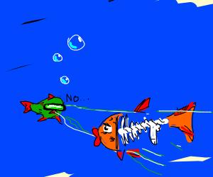 Poor X-ray Fish