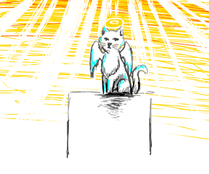 the holy angel cat