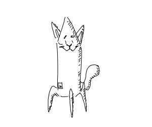 A cat rocket