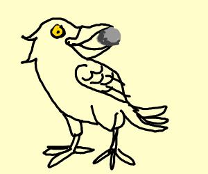 Crow Has A Rock In Its Beak