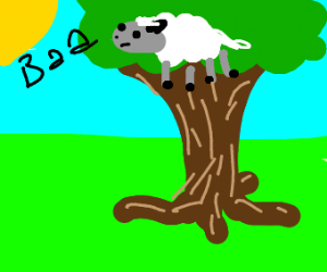 sheep in a tree