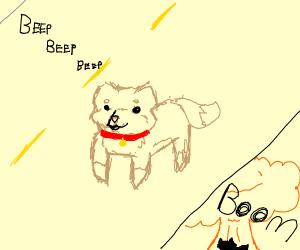 Woof-splode