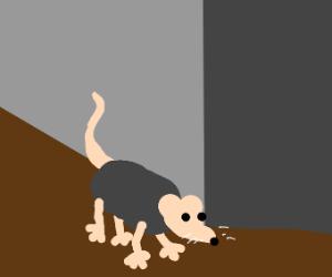 mouse peaks around the corner