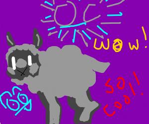 Fuzzy lamb OC