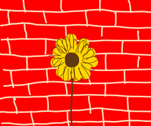 Sunflower in front of brick wall