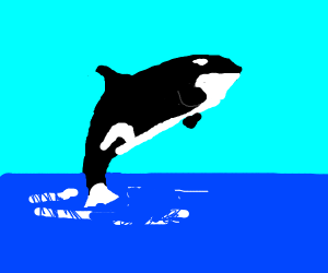 Big orca jumping out of water