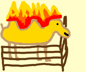 Camel in stable on fire