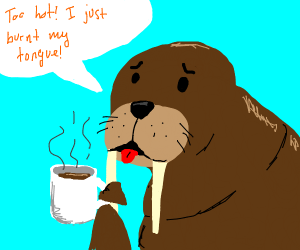Walrus drinks coffee that's too hot