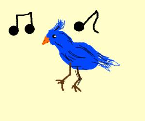 birb song