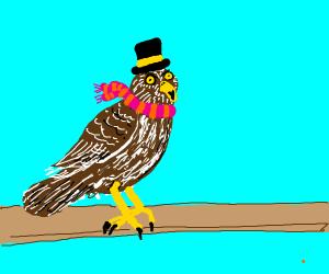 Snazzy hawk