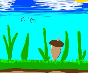 Acorn on grass