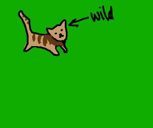wildcat on a walk