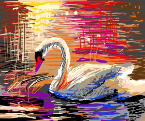 A beautiful swan in a lake