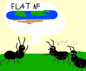 An ant believes in the flat earth