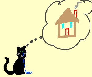 black cat missing home