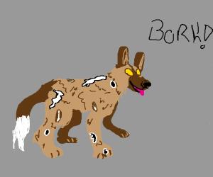 African wild dog?