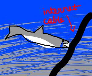 Depressed internet shark