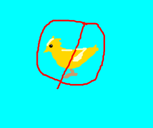 No yellow birds allowed