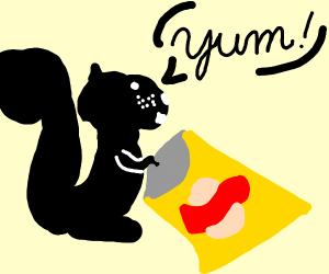 Black squirrel eats potatoe chips