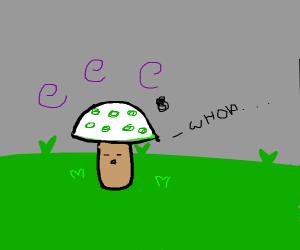 shroom gets high on grass