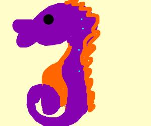 giant seahorse
