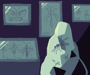 Insect collection.