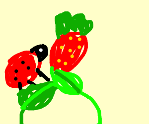 Ladybug eating a strawberry