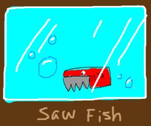 Saw fish swimming in a aquarium