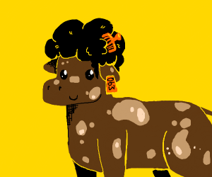 Cow with an afro
