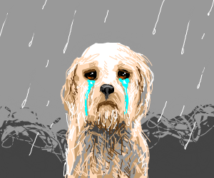 Dogs eyes bleed water while in the rain.