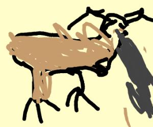 Moose Vomiting