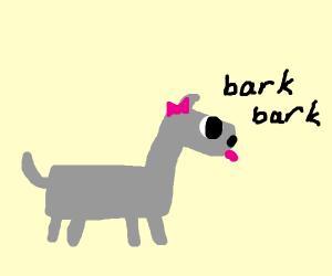 Cute grey dog