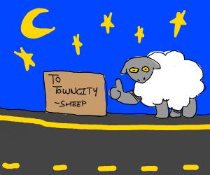 Sheep hitchhiking at night