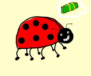 ladybug thinkin about cash money
