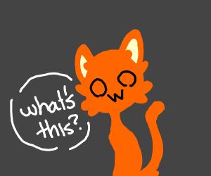 Orange kitty owo